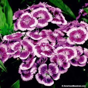 10-Perfect-Plants-for-Small-Gardens3-350x350