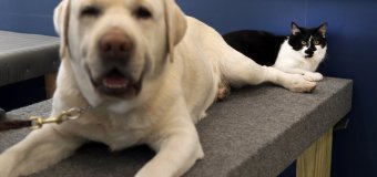 Cat Named D-O-G Works at Training Center for Dogs