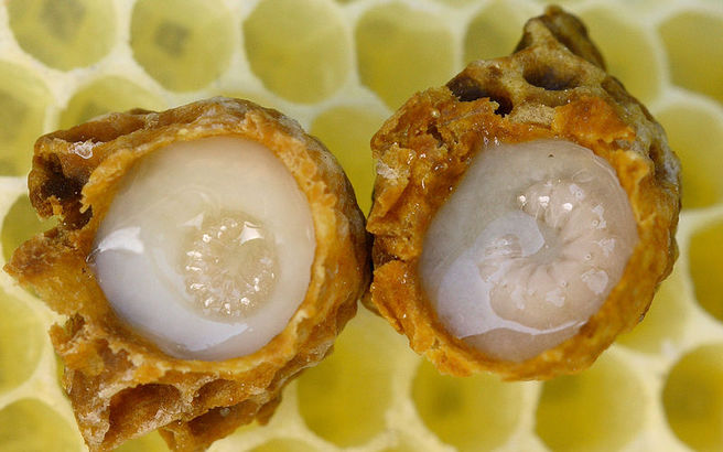 royal_jelly_larvae.medium