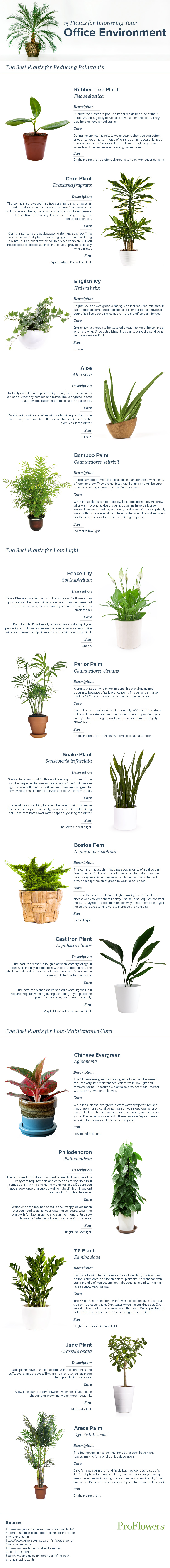 Indoor Plants For The Office Office Pollution With Indoor Plant Guide
