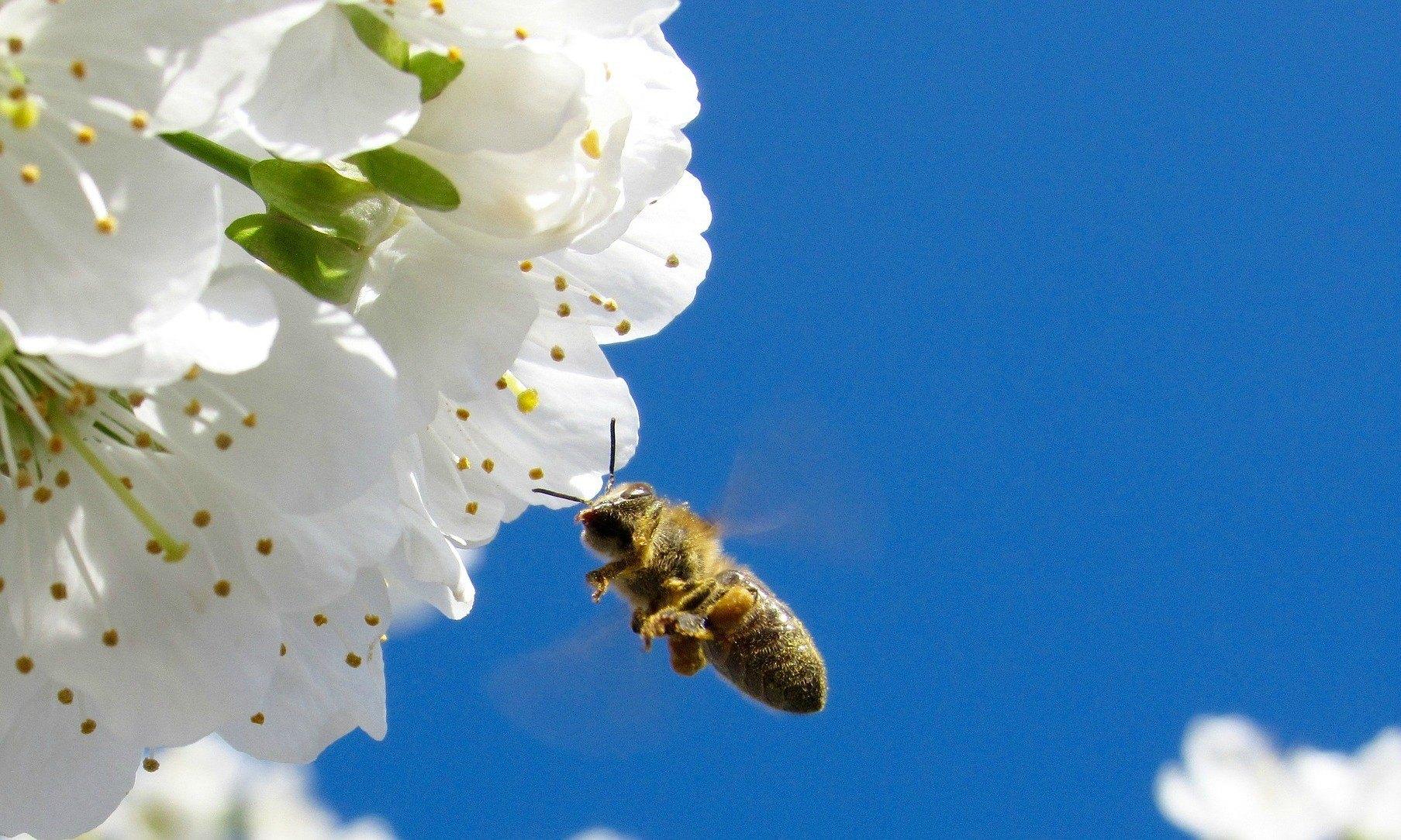 Fullsize Of Do Vegans Eat Honey