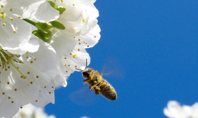 Large Of Do Vegans Eat Honey