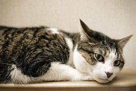 cat-1101995__180