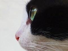 cat-123343__180