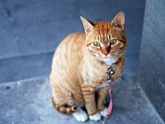 cat-360807__180