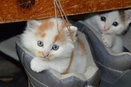 cat-451377__180
