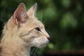 cat-912301__180