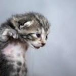 kitten-1047456__180