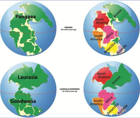 use the image below to think about how continental drift may have