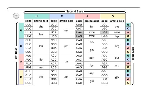 15 Use the chart below to determine the amino acid sequence of the