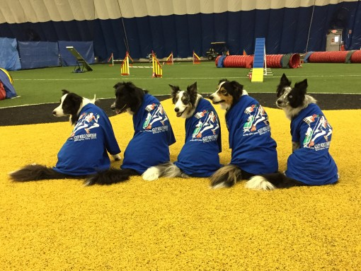 2015 AKC/USA Team Supporter Shirts