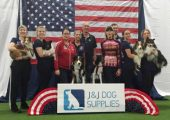 Announcing: The 2016 AKC/USA World Team!