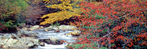 great smoky mountains fall colors