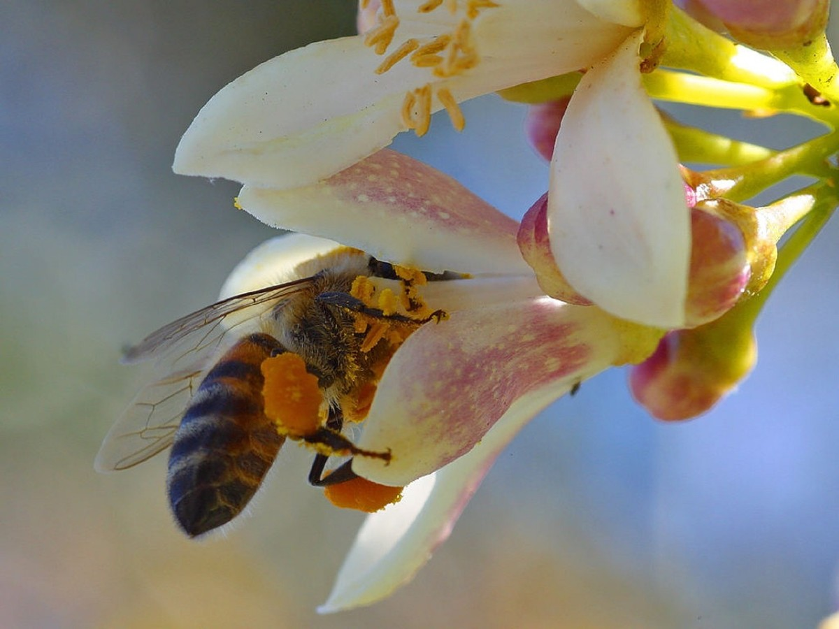 Fascinating Facts About Honey Bees 20 Questions \u2026with Answers
