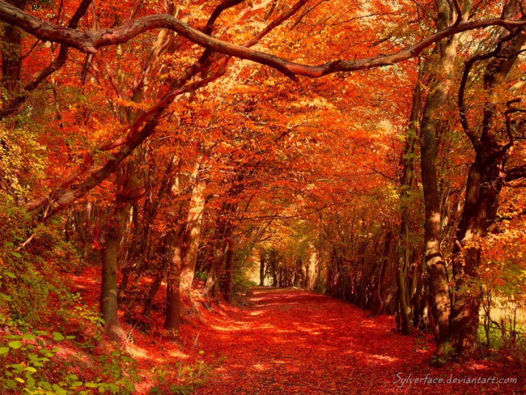 Fall Leaves Road Wallpaper When Autumn Comes Around Each Year Hubpages