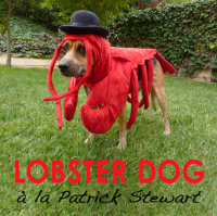 How To Make a Lobster Costume for Your Dog | PetHelpful