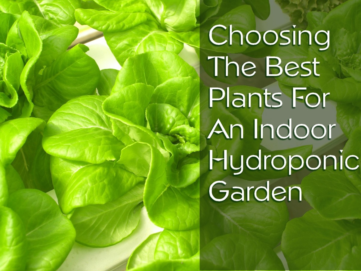 25 of the Best Plants for Indoor Hydroponic Gardens Dengarden