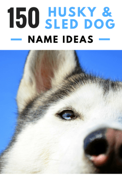 Small Of Siberian Husky Names