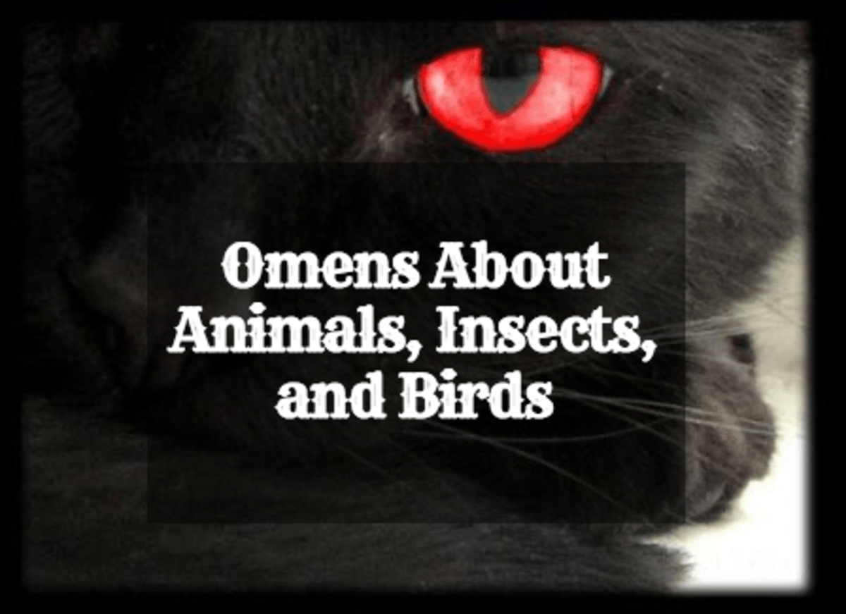 Animal, Insect, and Bird Omens and Their Meanings Exemplore