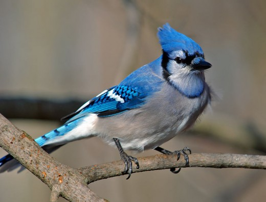 Swallow, Woodpecker, and Blue Jay Spirit Guide Meanings Exemplore