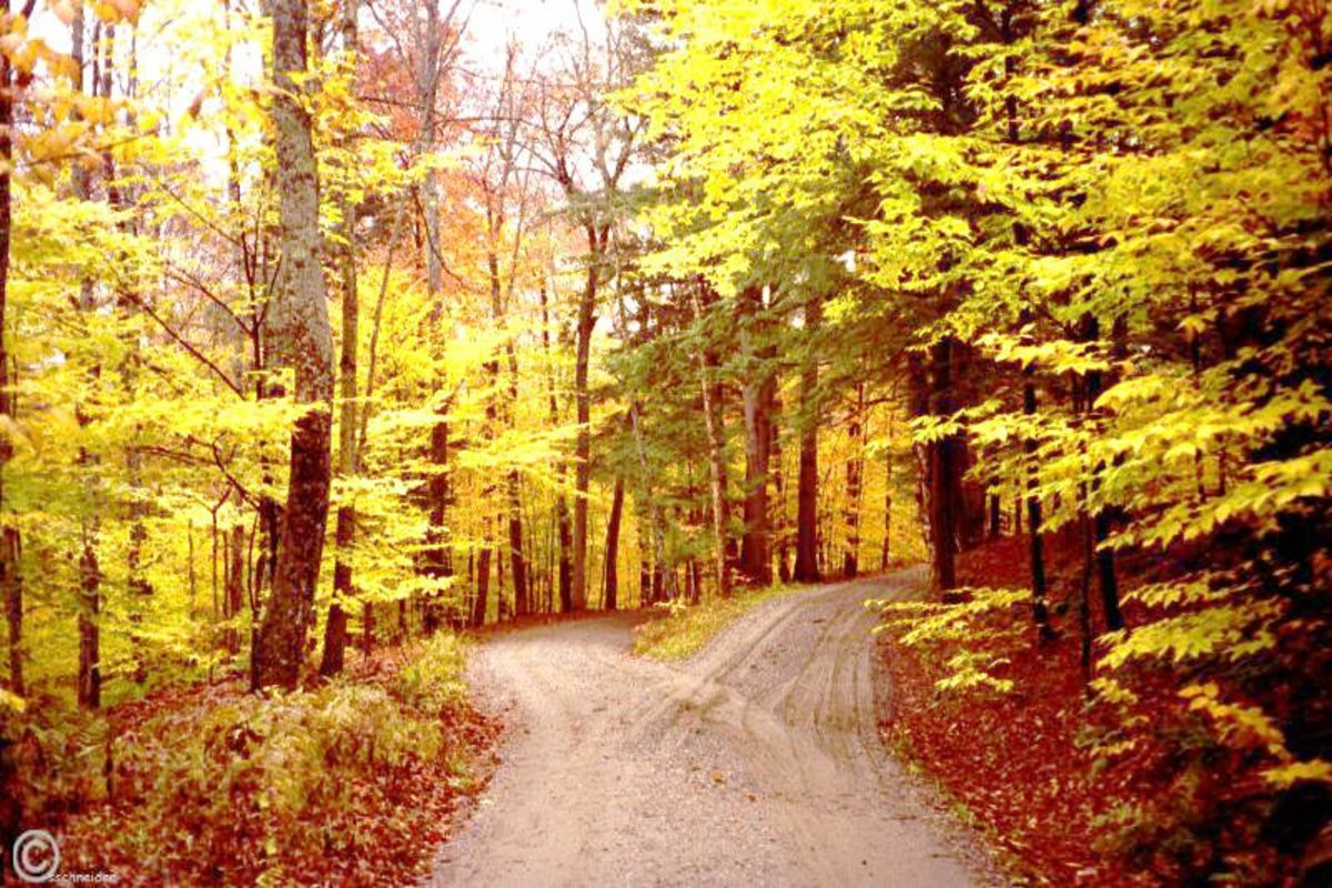 The Yellow Wallpaper Symbolism Quotes Robert Frost S Quot The Road Not Taken Quot The Meaning You Never