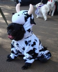 Funny Pictures of Dogs in Costumes | HubPages