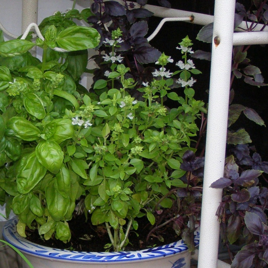 Herb Garden Container Herb Garden Container Tips For Success Out Or Indoors