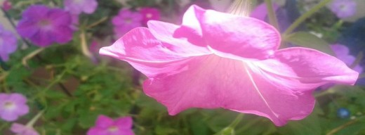 I took this picture of the flowers in my garden on one sunny day. It only took a minute and it turned out beautifully.