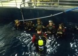 Busan Aquarium - Swim with Sharks