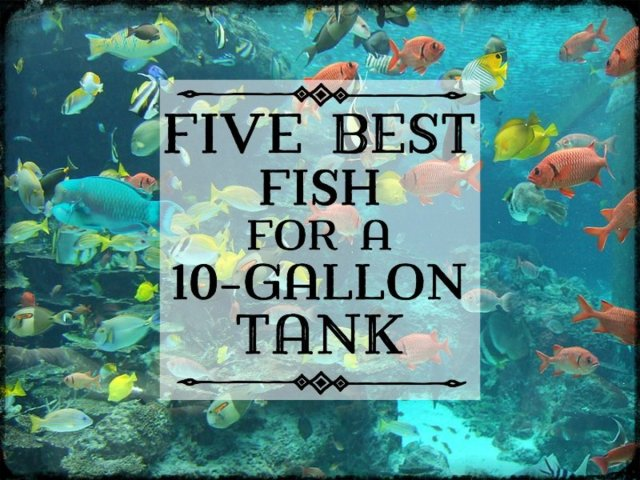 Easy Fish Tank Care and Maintenance Tips for Beginners | PetHelpful