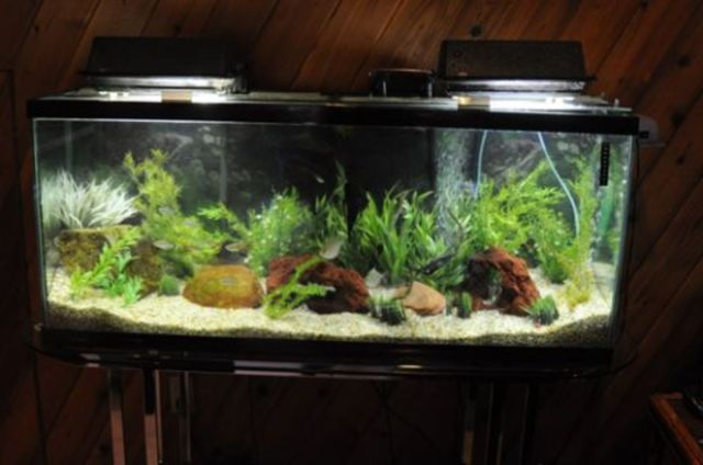 Healthy Aquarium Through Simple Water Changes And Easy Maintenance