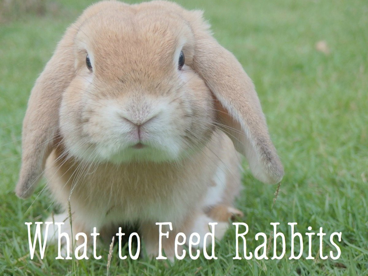 Bunny Care Guide What Foods Do Rabbits Eat? PetHelpful