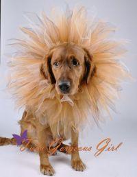 homemade lion costume dog 10 diy halloween dog costumes ...