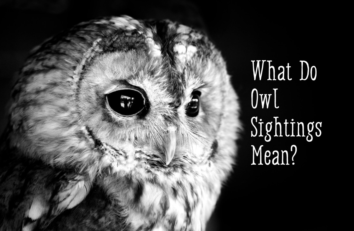 Owl Symbolism What Does It Mean When You See An Owl