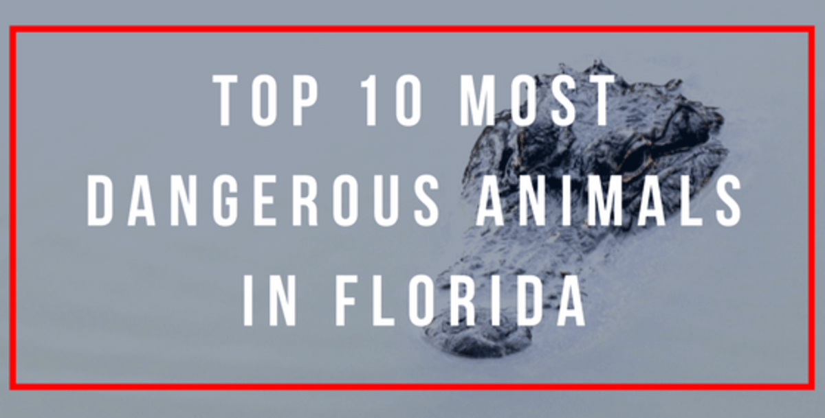 The Top 10 Most Dangerous Animals in Florida WanderWisdom