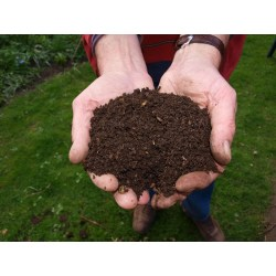 Small Crop Of Maggots In Compost
