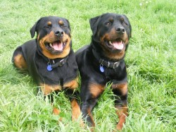 Small Of Excessive Panting In Dogs