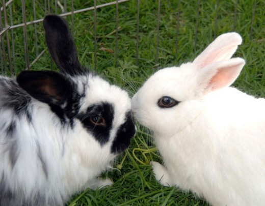 How to Tell If Your Bunny Loves You PetHelpful