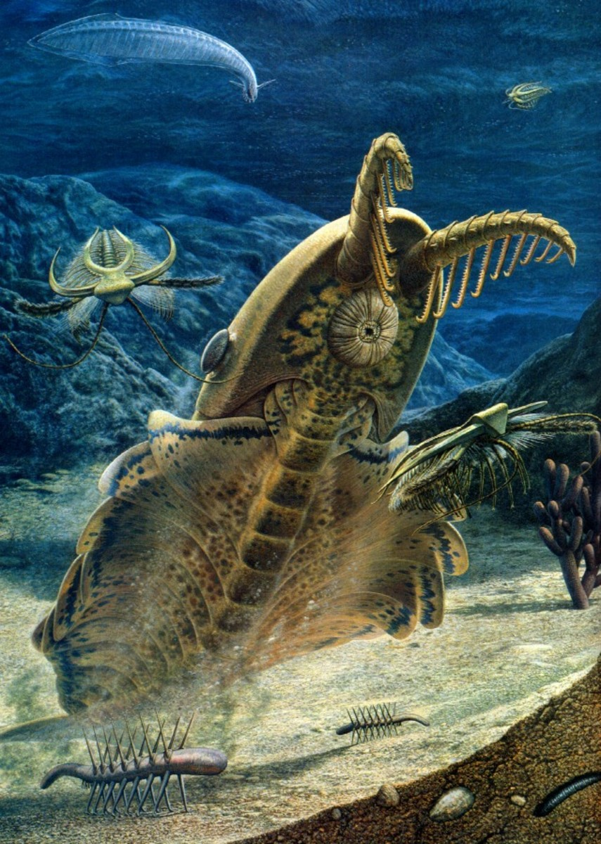 Earth S Earliest Gigantic And Bizarre Creatures Hubpages