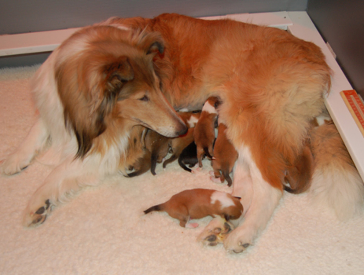 Newborn puppies what you need to know hubpages
