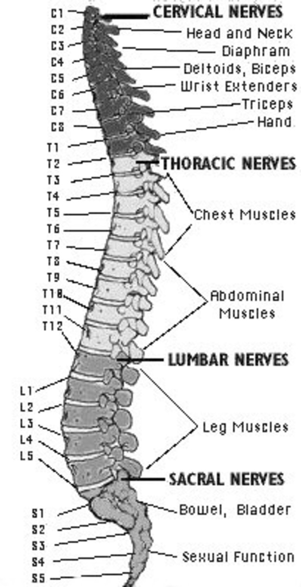 spine diagram canal
