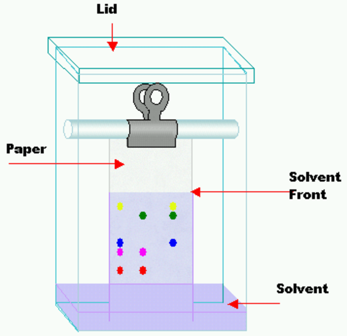 What Is Paper Chromatography and How Does it Work? Owlcation
