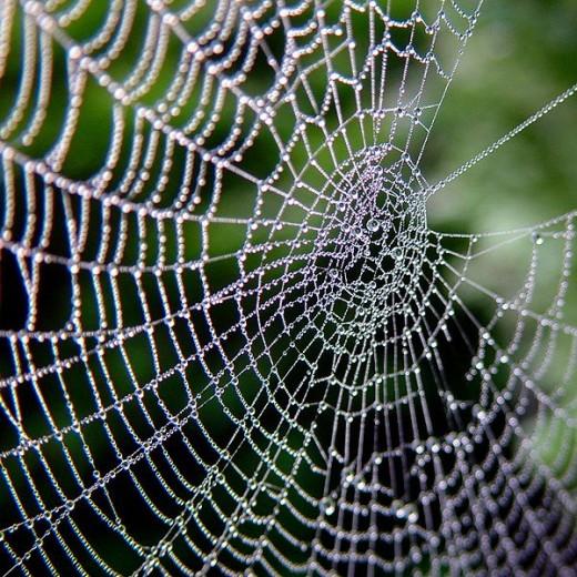 Animal Spirit Guides Meanings Spider Spirit Guide  Mythology