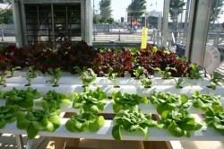 Small Of Indoor Vegetable Garden Setup