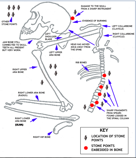 wiring diagram in addition skeletal and muscular system diagram