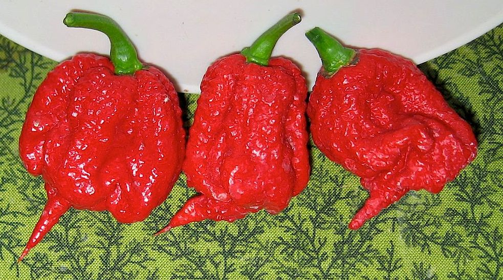 Worlds Hottest Chile Pepper World Record Heat