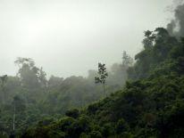 La forêt primaire...