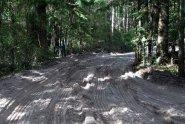 La piste sur Fraser Island
