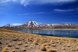 Laguna Miscanti (alt. 4120 m)