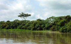 Les bords du rio Magdalena